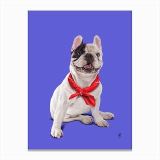 Frenchie (Colour) Canvas Print