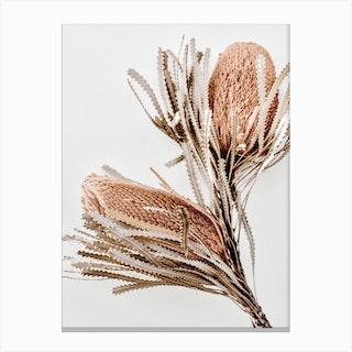 Banksia 1 Canvas Print