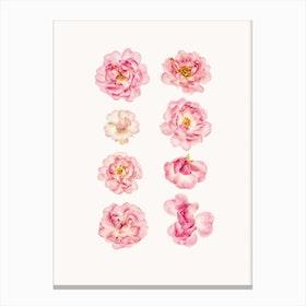 Flower IV Canvas Print