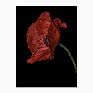 Poppy Red 03 Canvas Print