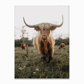 Highland Cow On The Farm Canvas Print