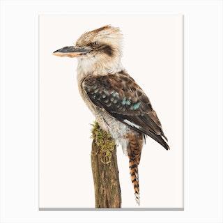 Birds VIII Canvas Print