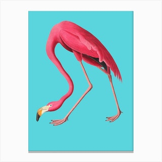 Flamingo Blue Vintage Illustration Pop Canvas Print