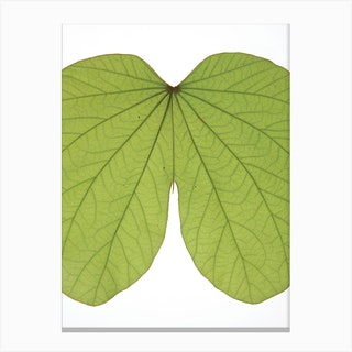 Leaf Butt Canvas Print