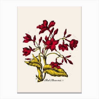 Red Plumeria Canvas Print