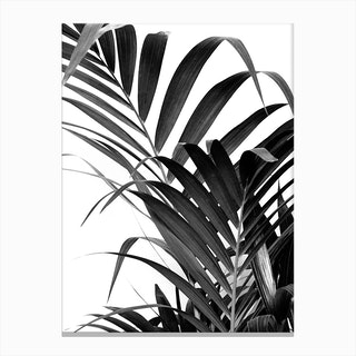 Palm Leaf 02 Canvas Print