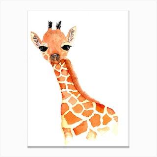 Baby Giraffe Canvas Print