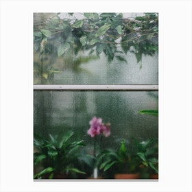 Window Orchid Canvas Print