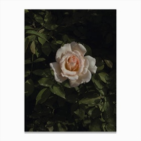 Rococo Rose Canvas Print