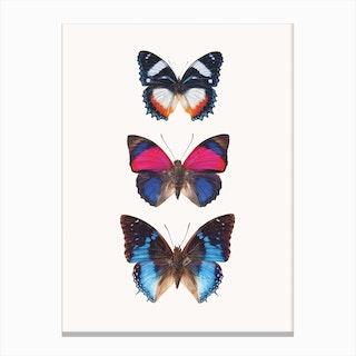 Butterflies III Canvas Print