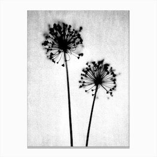 Dandelion I Canvas Print