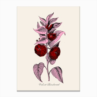 Red And Pink Canvas Print