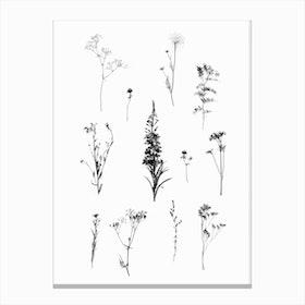 Botanical Bw Canvas Print