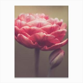 Copper Tulip Canvas Print