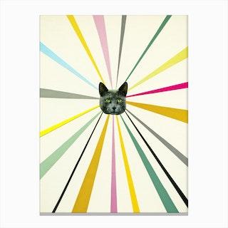 Cat's Eyes Canvas Print