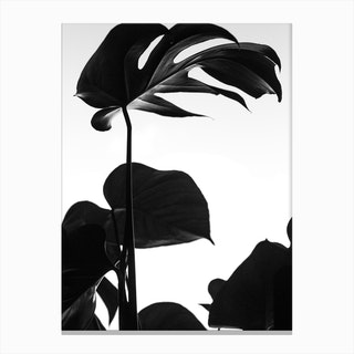Black And White Monstera Photo Canvas Print