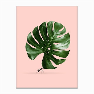 Monstera Ant Canvas Print