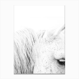 White Horse II Canvas Print