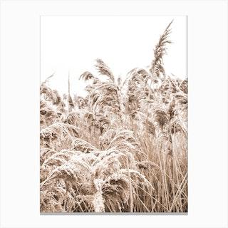 Golden Grass III Canvas Print
