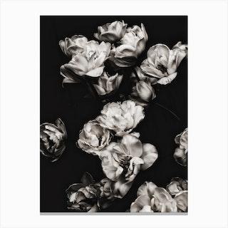 White Tulips 2 Canvas Print