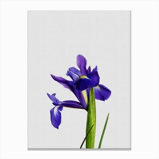 Iris Still Life Canvas Print
