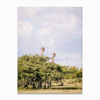 Kenya Giraffe Canvas Print