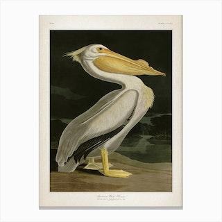 Vintage Audubon 1 American White Pelican Canvas Print