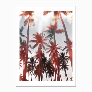 Palms II Canvas Print