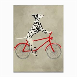 Dalmatian On Bicycle Canvas Print