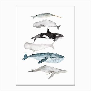 Sea Life Whales Canvas Print