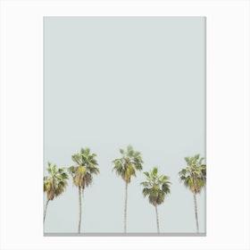 Palm Trees  2 Canvas Print