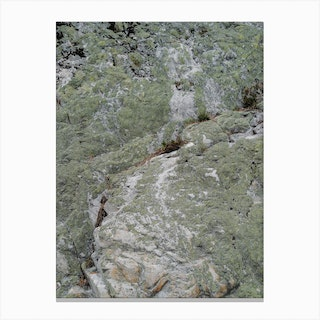 Wall Of Moss Canvas Print
