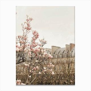Paris Magnolia 2 Canvas Print