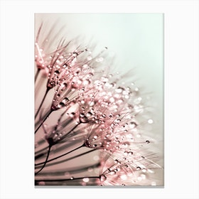 Blush Dandelion Canvas Print