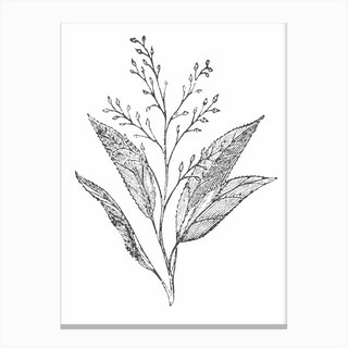 Botanical Leaves and Stem Canvas Print
