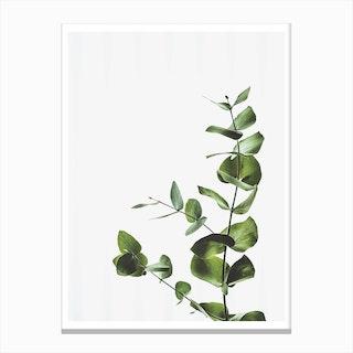 Elegant Green Plant Canvas Print