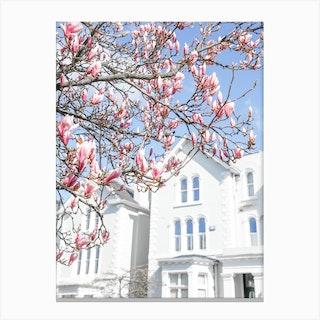 Blue Sky Magnolia Canvas Print