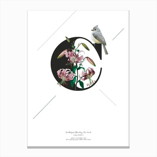 Botanical Alphabet C Canvas Print