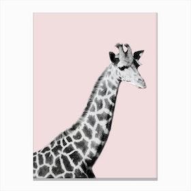 Giraffe on Pink Canvas Print