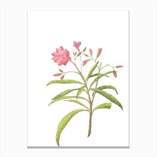 Pink Floral Watercolour Rose Canvas Print