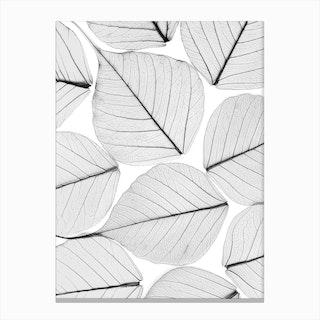 Skeleton Leaf II Canvas Print