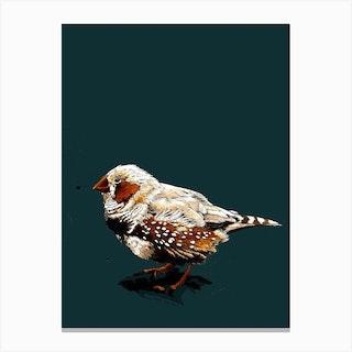 The Zebrafinch On Deep Cyan Canvas Print