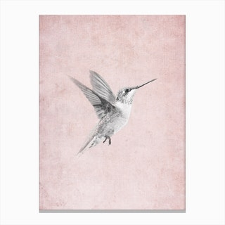 Vintage Hummingbird Canvas Print