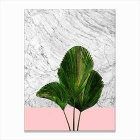 Palm Plant on Marble and Pink Wall Canvas Print