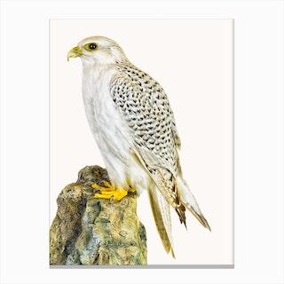 Birds III Canvas Print