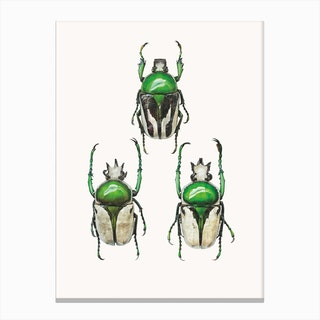 Insects IV Canvas Print