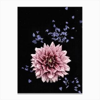 Flower Studies 3 Canvas Print