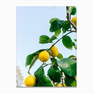 Amalfi Coast Lemons Iii Canvas Print