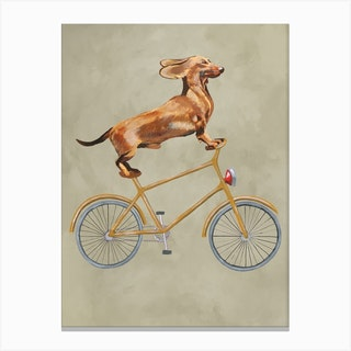 Dachshund On Bicycle Canvas Print