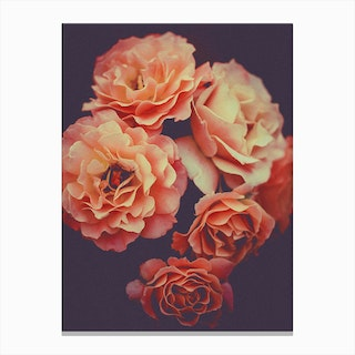 Roses Flowers Decor Canvas Print